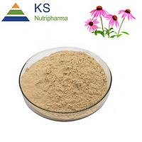 Echinacea purpurea extract Cichoric acid 2% 4% #T