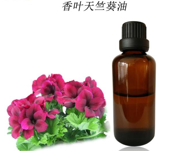 Geranium oil Spa Essential Oil Massage Essential Oil