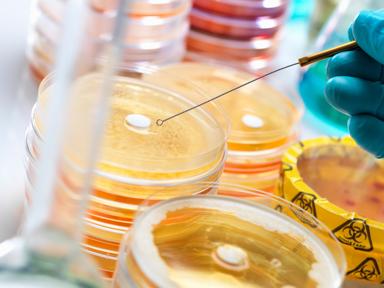 Amoxicillin Trihydrate API Powder Manufacturers in China