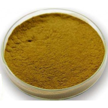 Echinacea Purpurea Extract Powder 4%