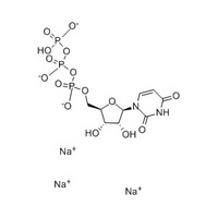 Uridine-5´- Triphosphate Trisodium Salt nucleic acid /protein synthesis