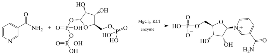 Enzymatic Synthesis Route of Fu Rongzhao, et al.