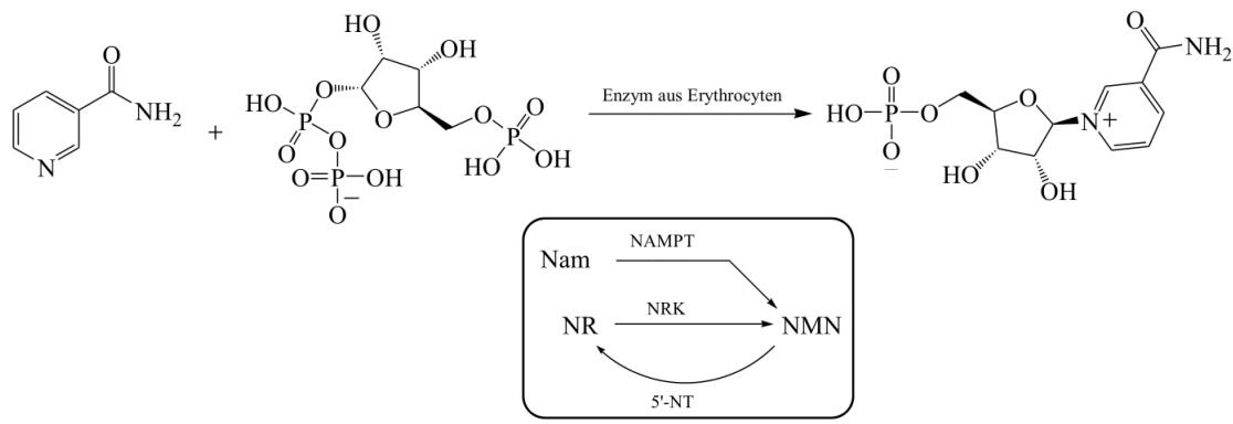 Enzymatic Synthesis Route of Jack et al.