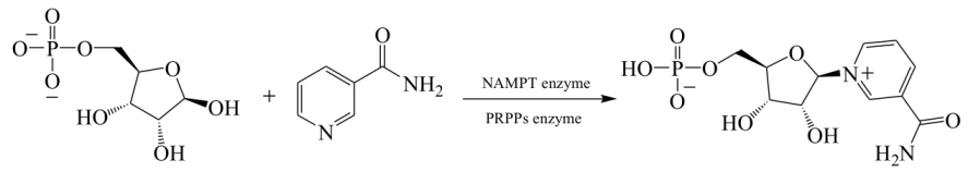 Enzymatic Synthesis Route of Zhu Wei